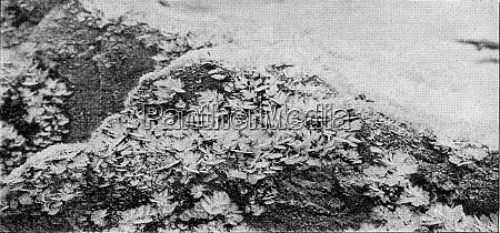 atmospheric ice crystals vintage engraving