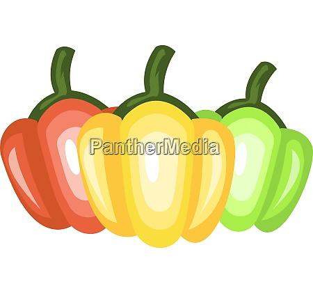 three capsicums vector color illustration