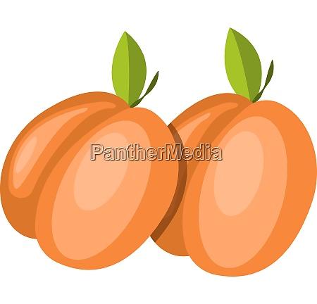 red fruits vector color illustration