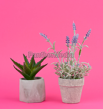 gray ceramic pot with a growing
