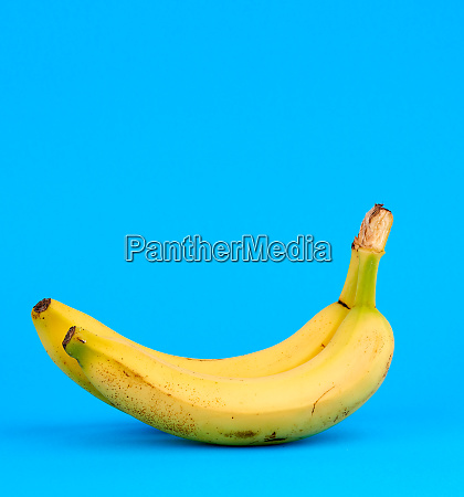 ripe yellow banana on a blue