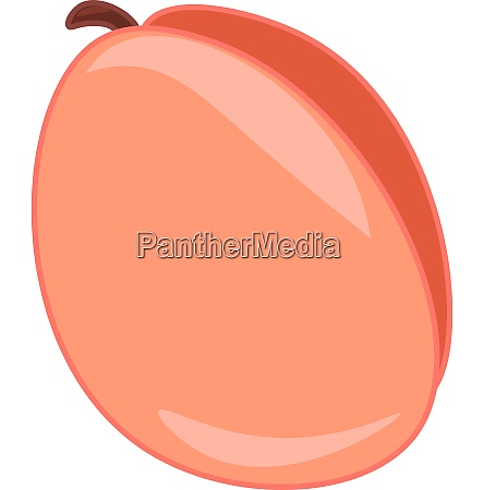 a fresh juicy apricot fruit to