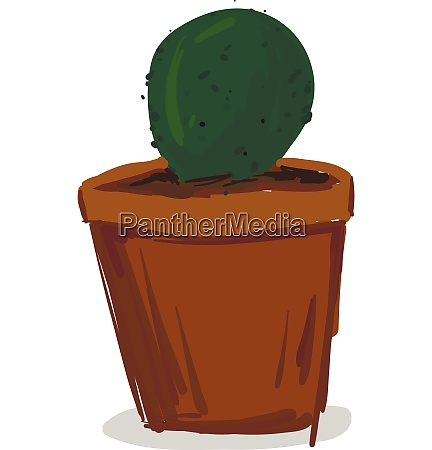 a small green cactus plant on