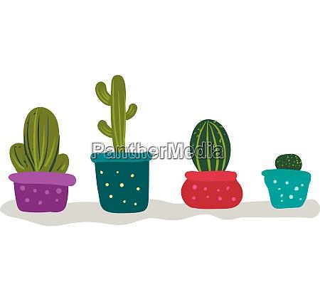 bunch of cactus plants for indoor
