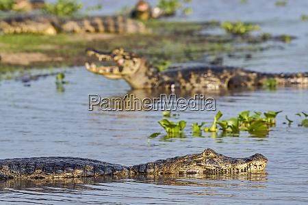 brazil pantanal 2019 20228