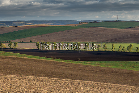 agricultural landscape panorama