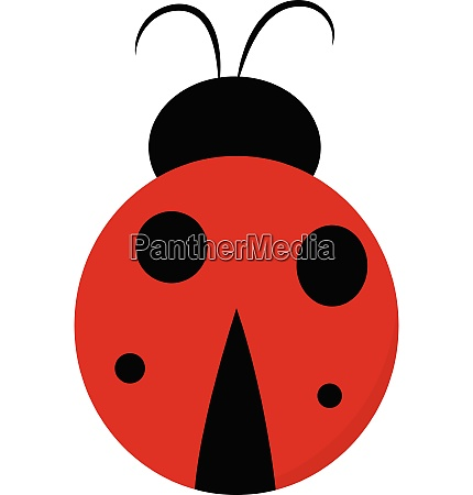 cute lady bug vector or color