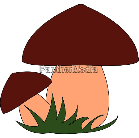 two mushrooms vector or color illustration