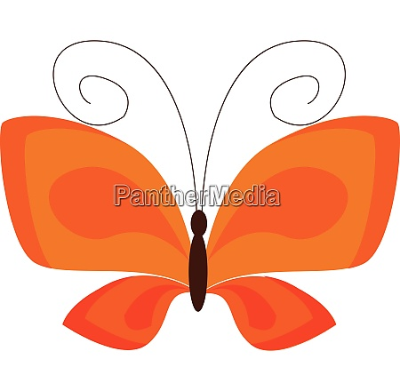an orange butterfly vector or color