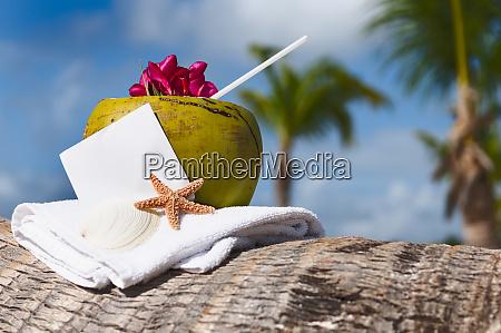 coconut cocktail starfish tropical caribbean beach