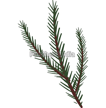 branches of a spruce tree vector