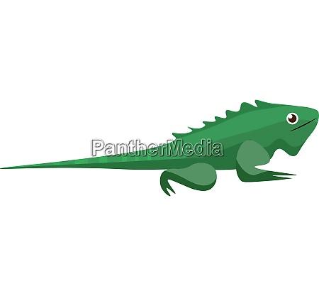 a crawling green iguana iguana iguanawild