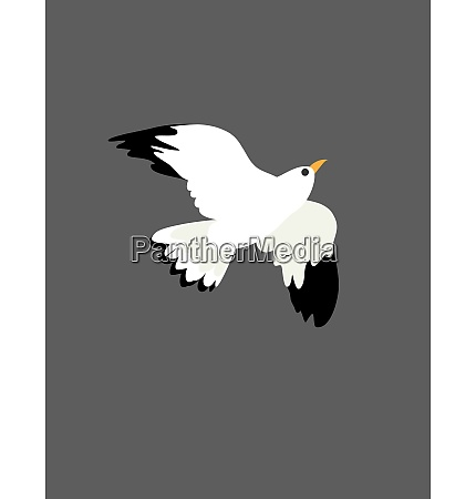 portrait of the bird seagull at