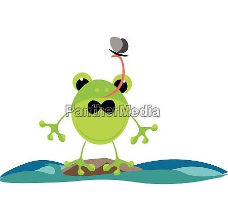 green frog vector or color illustration