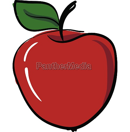 red apple vector or color illustration