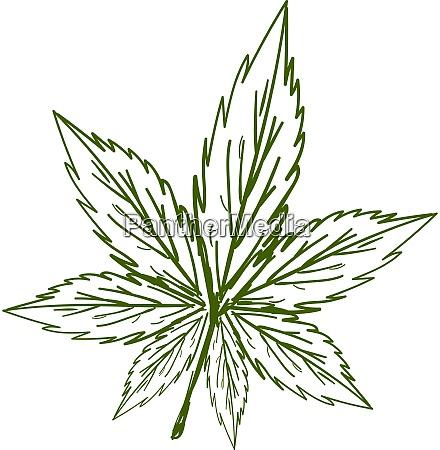 marijuana sketch illustration vector on white