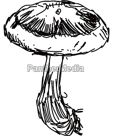 mushroom drawing illustration vector on white