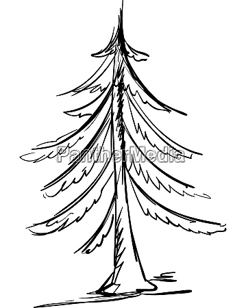 drawing of spruce illustration vector on