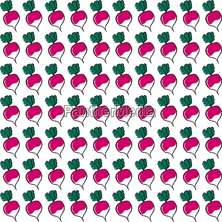 radish wallpaper illustration vector on white