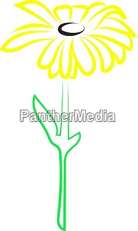 chamomile flower illustration vector on white
