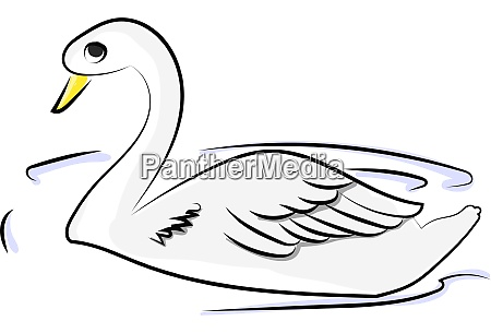 white swan in water illustration vector