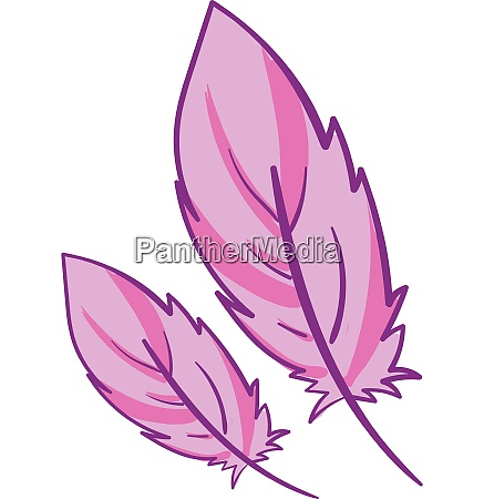 pink feathers vector or color illustration