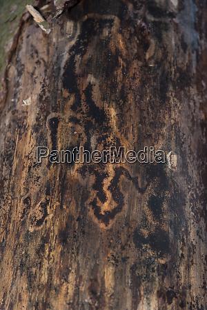 bark beetle damage to tree