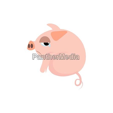sad pig vector or color illustration