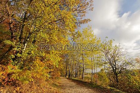 golden autumn in nature reservat senne