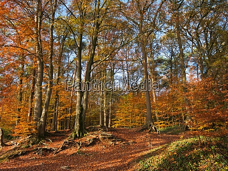 autumn forest idyll