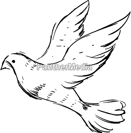 white dove illustration vector on white
