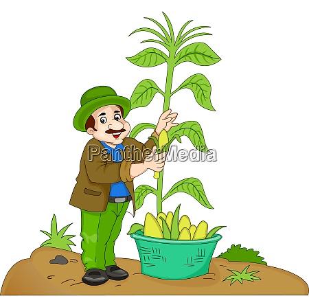 man harvesting corn illustration