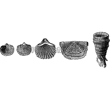 the first animals fossil shells of