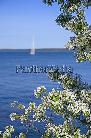 white blossoms by sea in bar