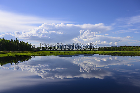 clouds reflected in bass harbor marsh