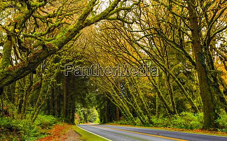 road through the california redwoods california