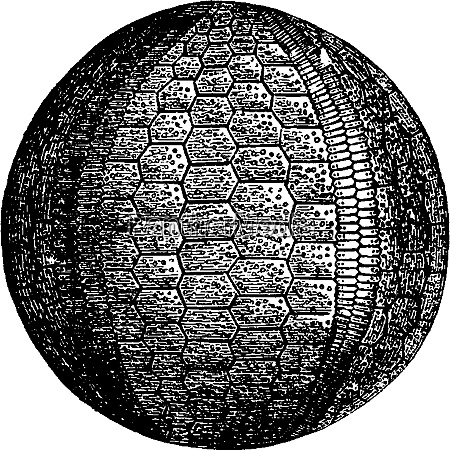 urchins and crinoids of the carboniferous