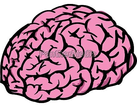 human brain illustration vector on white