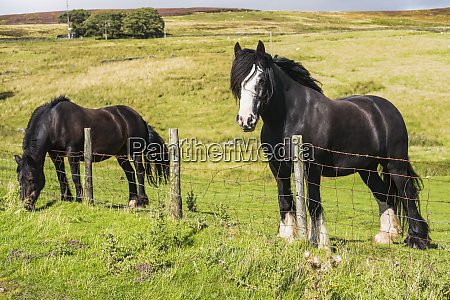 two horses standing at a fence