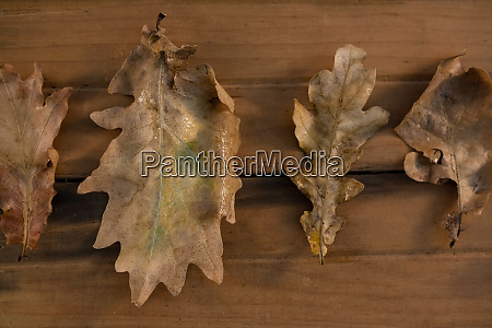 overhead view of dry leaves