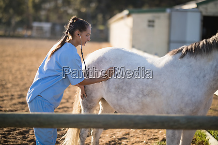 side view of female vet examining