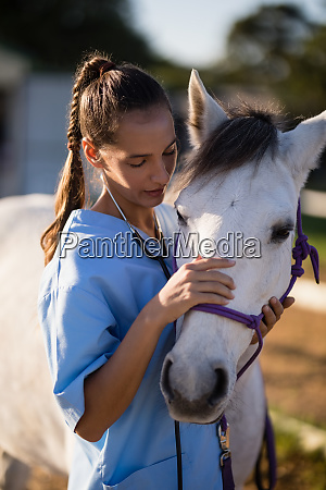 female vet stroking white horse