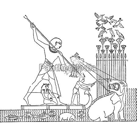 hippopotamus hunt vintage engraving