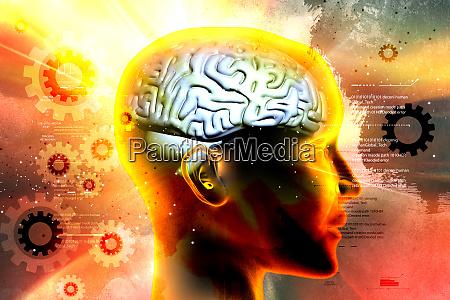 presentation of female brain