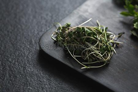herb in a chopping board