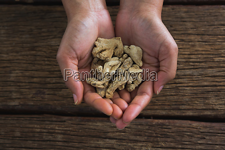 hands holding dried ginger against wooden