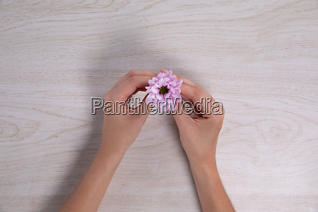 hands holding a small pink flower