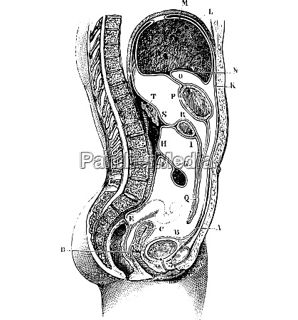 vertical and antero posterior of the