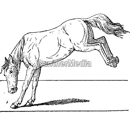 horse kick vintage engraving