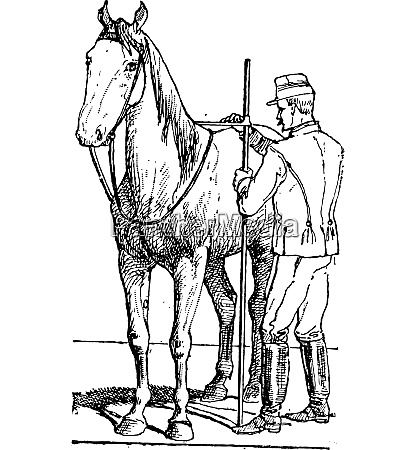 horse rider measuring horse size vintage